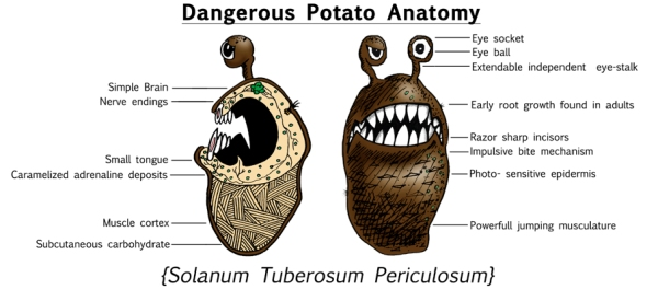 Dangerous-Potato-Anatomy